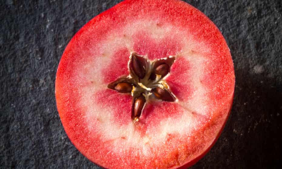 A red-fleshed apple of the Redlove hybrid variety