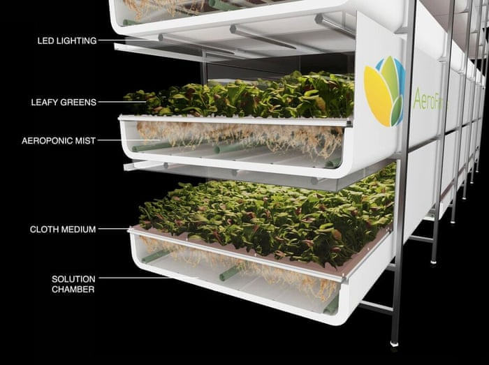 World's largest vertical farm grows without soil, sunlight