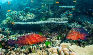"Great Barrier Reef researchers found corals inside the protected areas were more resilient to disease, bleaching, outbreaks of crown-of-thorns starfish and they recovered quicker from storm damage. Researchers have also found, not surprisingly, that ""no take"" zones increase the numbers of fish."
