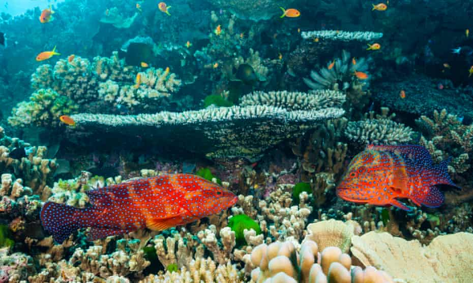 """Great Barrier Reef researchers found corals inside the protected areas were more resilient to disease, bleaching, outbreaks of crown-of-thorns starfish and they recovered quicker from storm damage. Researchers have also found, not surprisingly, that """"no take"""" zones increase the numbers of fish."""