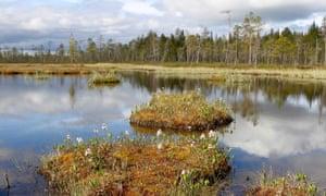 Viiankiaapaa is, a stunning 65 square kilometre habitat for 21 endangered bird species in Finland's Arctic circle.