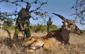 Game rangers free a female Eland antelope from an illegal snare at the Ol Pejeta Conservancy in Kenya