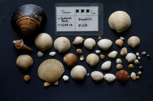 Samples of shells taken from Jutland Bank, Denmark.