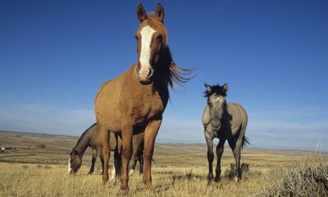 The odd history of horses