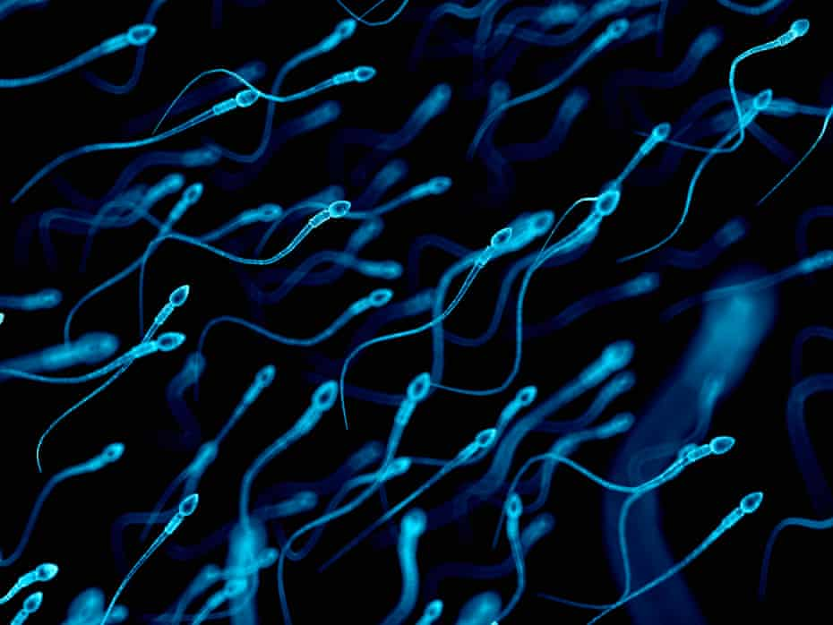 Research suggests that sperm counts have dropped by half in the last 50 years or so and that a higher percentage are poor swimmers.