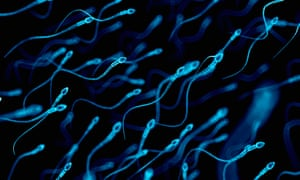 """'Look at the scaremongering about allegedly industrial levels of """"sperm theft"""".'"""