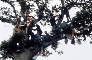 People climb a tree for a better view, Isle of Wight