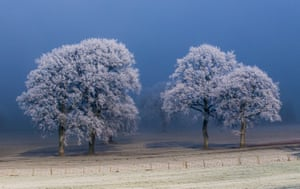 Hoarfrost covered tree in a snowy field, Hay-on-Wye, Wales