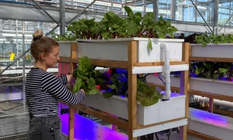 The vertical farms at Nottingham Trent University.