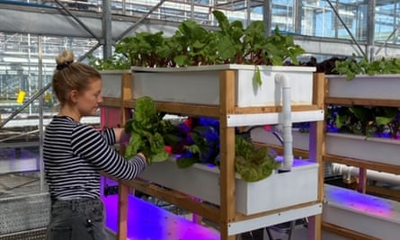 The vertical farms at Nottingham Trent University.