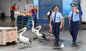 Senior police officers running the operation for safe social distancing walk past some pelicans at Sydney Fish Market on 10 April 2020 in Sydney, Australia. With strict social distancing rules in place the Sydney Fish Market has implemented new measures for Easter weekend including additional crowd control to limit how many people can be on site at one time will be in place.