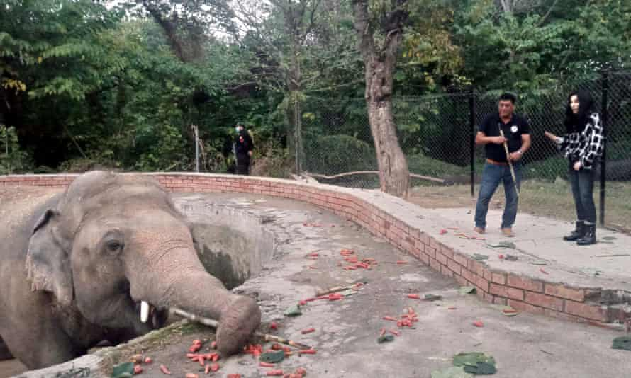 Cher visited the elephant at the zoo in Islamabad, Pakistan.