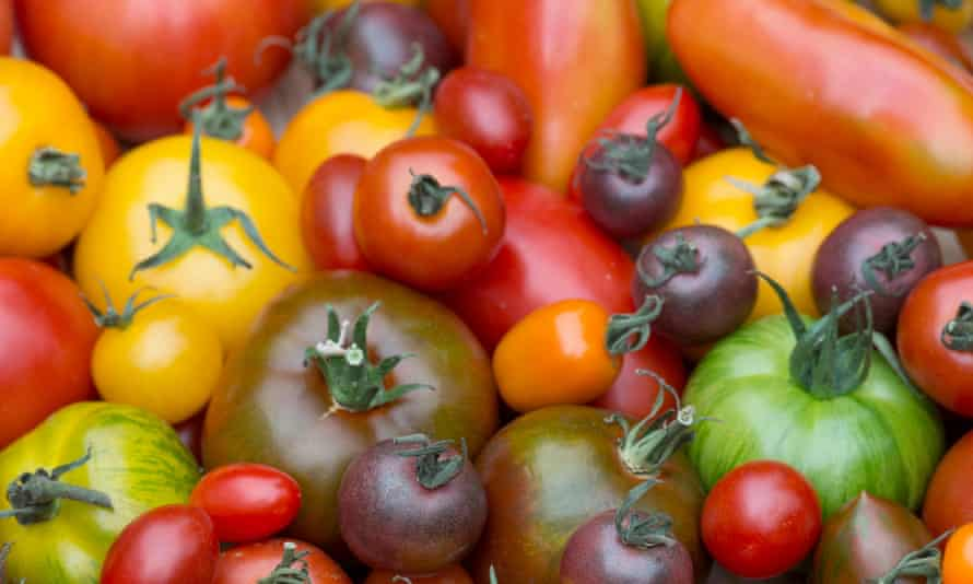A medley of tomatoes