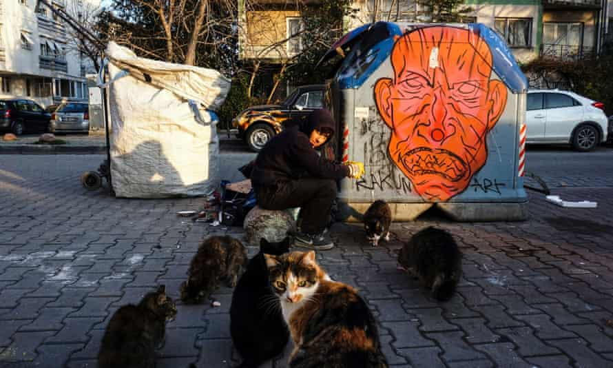 A boy feeds street cats in Istanbul.