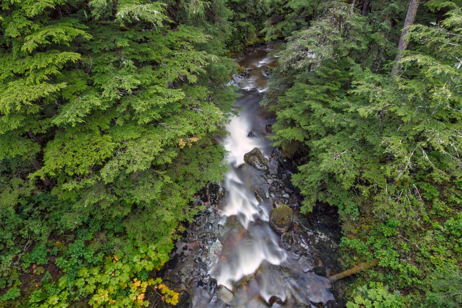 A river in the Tongass, which has been found to absorb more carbon than any other national forest. Photograph: Tim Plowden/Alamy Stock Photo
