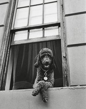 79th Street, New York, 1952