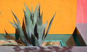 Agave americana in the Beneath A Mexican Sky garden.