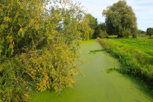 Eutrophication in a river in Suffolk
