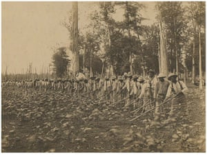 Prisoners performing fieldwork in Mississippi in about 1911.