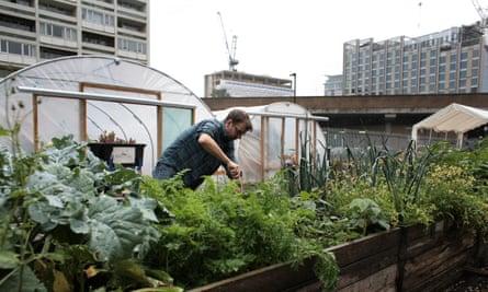 Oasis Farm An urban farm in Waterloo, London