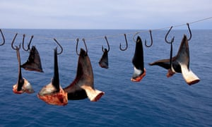 A shark finning camp in Mexico.