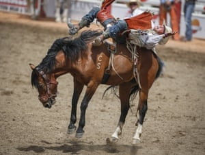 Rodeo rider Clayton Biglow manages to hang on after his mount fell but regained its footing during the bareback rodeo at the Calgary Stampede in Canada.