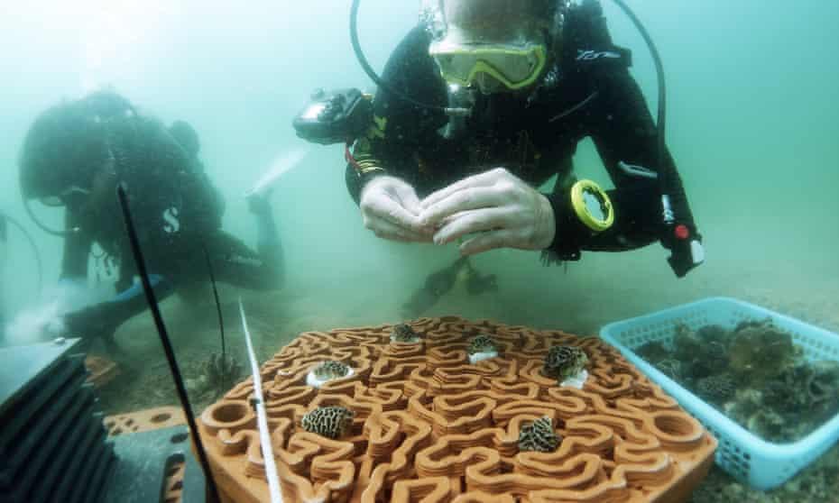 3D printed terracotta tiles to create artificial reefs, University of Hong Kong