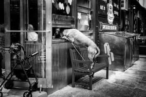 Dog at cafe window in Lower Manhattan, New York, by John White