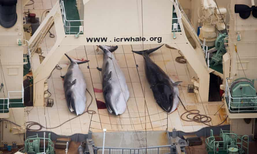 Whales killed in the Southern Ocean