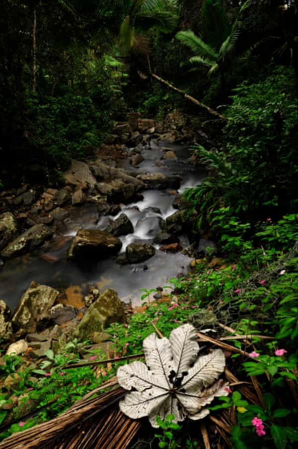 La Mina river cascades over rocks in El Yunque national forest