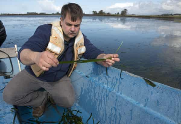 Biologist Brent Hughes working in Elkhorn Slough.