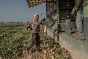 Farm workers harvest melons in Los Alcazares, in the region of El Campo de Cartagena, which borders Mar Menor.