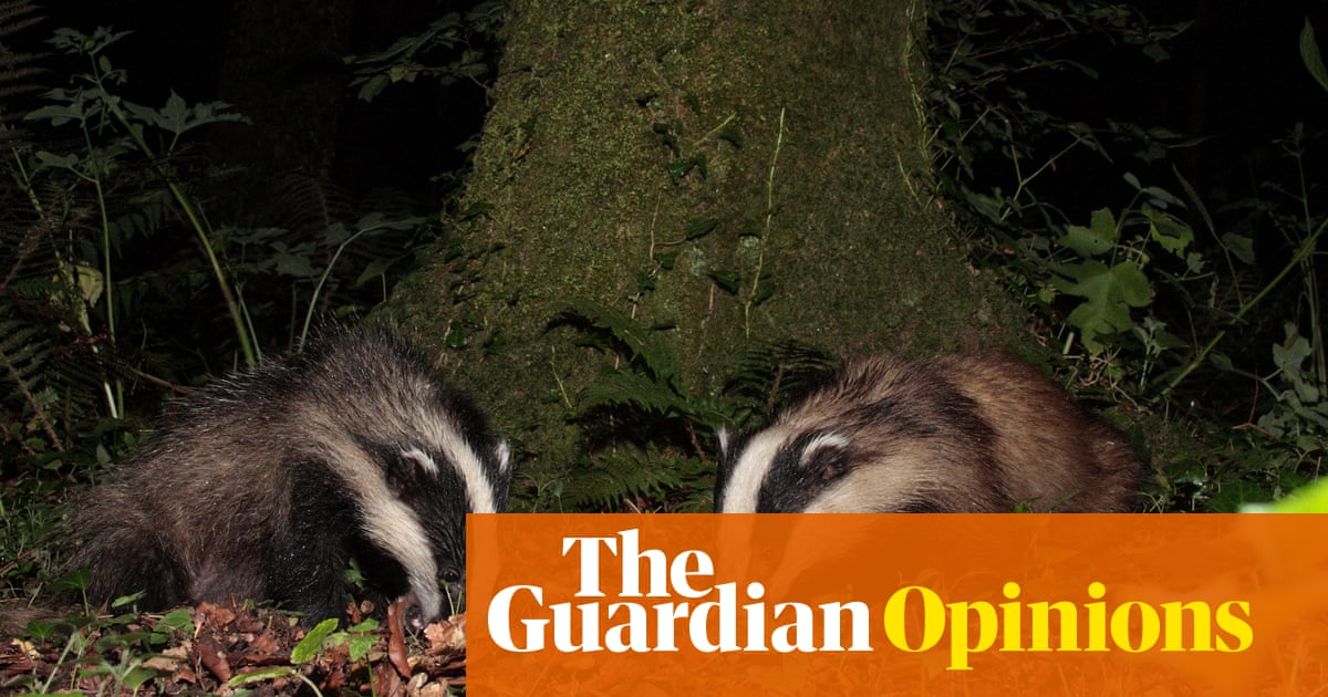 The extension of the badger cull is horribly cruel – and it won't help farmers
