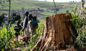 Ogiek tribes children stand near tree stamp in Mauche settlement scheme of Mau Forest Complex in the Rift Valley Kenya. Photograph: Thomas Bohlen/Reuters/Corbis
