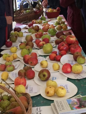 Apple display at Cotehele