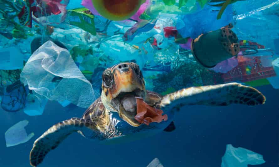 A turtle trying to eat a plastic cup drifting in the middle of a huge rubbish patch floating in the ocean.