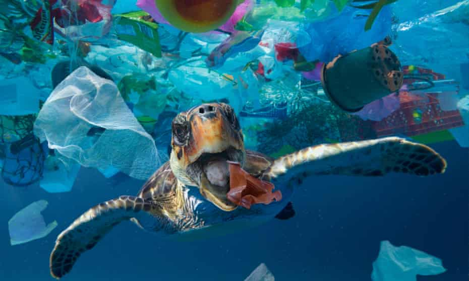 turtle in blue water in patch of plastic garbage