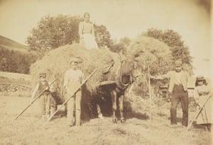 Leading hay, 1894