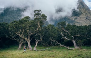 """Cyril crosses the """"Plaine des Tamarins"""" which owes its name to the dense forest of tall tamarind trees that grow at this altitude."""