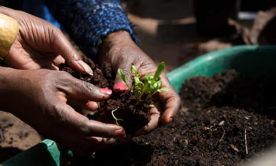 Gardening session run by South London and Maudsley NHS trust for asylum seekers and refugees with PTSD