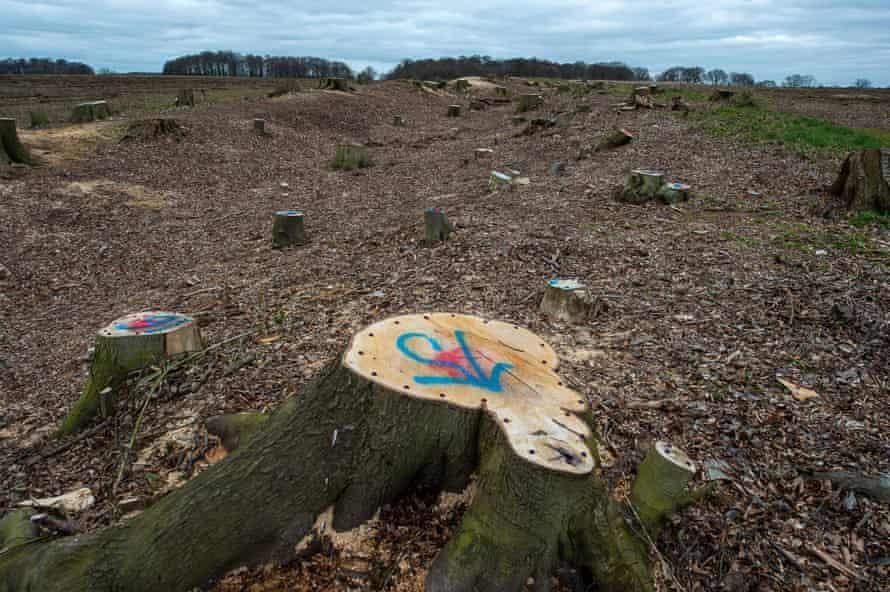 HS2 tree destruction, Aylesbury Vale, Buckinghamshire, UK