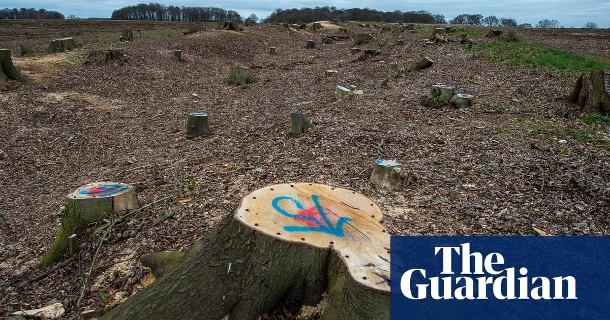 Tories' 'toothless' UK policies failing to halt drastic loss of wildlife