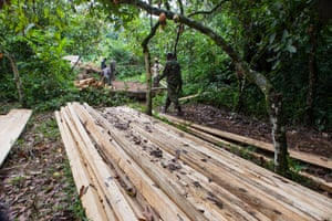 A patrol of eco-guards investigate illegal logging in the Congo.