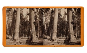 """The Sentinels 300 ft. High 69"""" in Circumference, 1872; from the series Views in the Yosemite Valley, California, and Alaska"""