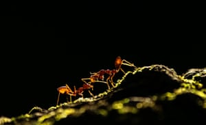 Overall runner-up - Ant Tale by Upamanyu Chakraborty