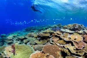 Scientist from James Cook University inspects corals on Australia's Great Barrier Reef that survived bleaching from rising sea temperatures.