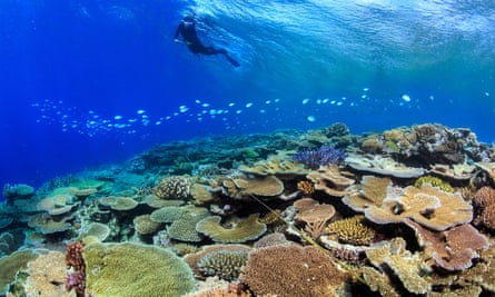 A researcher surveys corals on Australia's Great Barrier Reef.