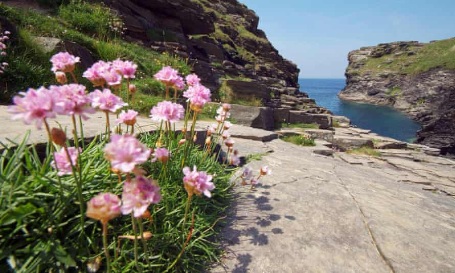 Sea Pinks in Rocky Valley on the coast between Tintagel & Boscastle