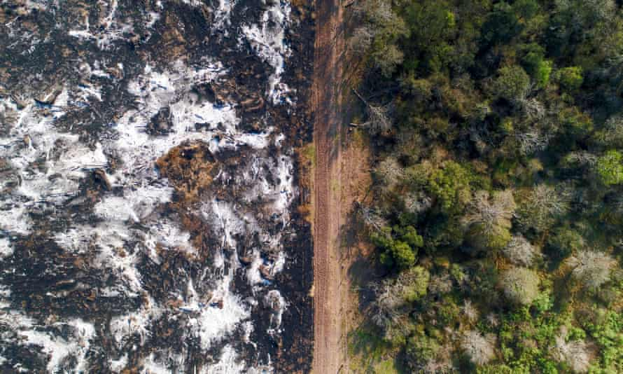 Deforestation in Argentina's Gran Chaco