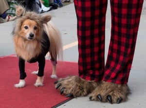 Dogs walk on the red carpet during the annual Haute Dog Howl'oween parade in Long Beach